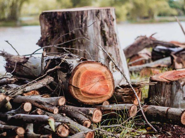 Freischneider Holz